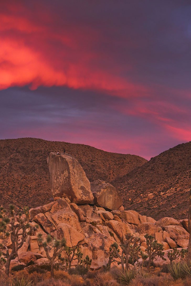 Joshua Tree National Park + 15 Incredible Trips Around Las Vegas You Need to Take // Local Adventurer #joshuatree #roadtrip