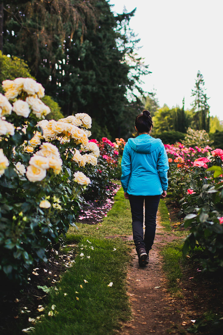 The International Rose Gardens - for your Portland Oregon Summer Bucket List // Local Adventurer #pdx #portland