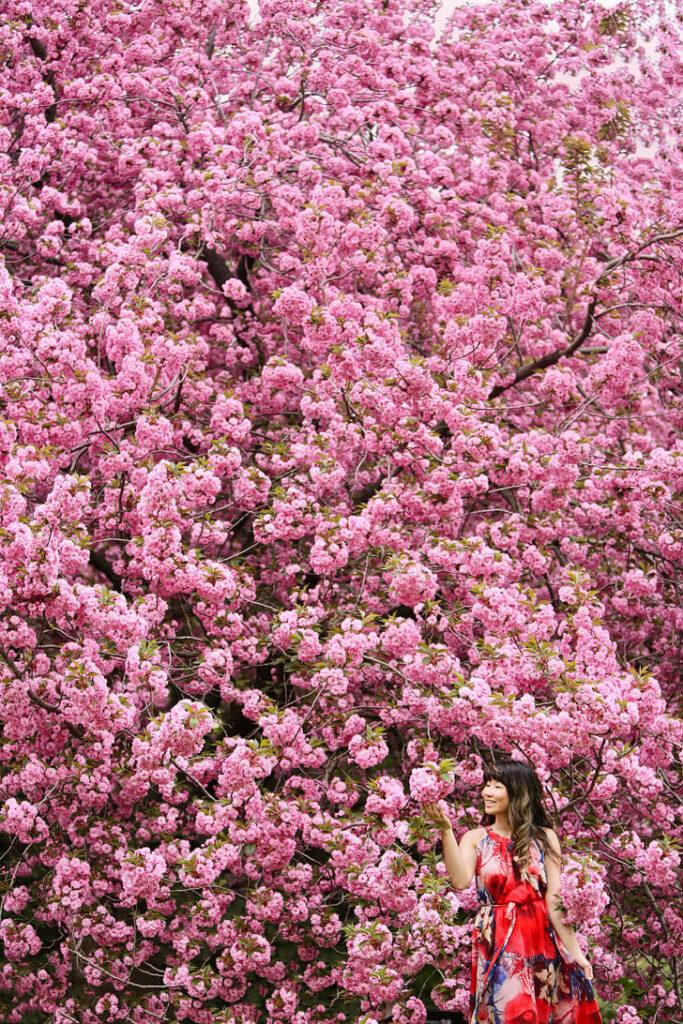 Brooklyn Botanic Garden Cherry Blossom Festival + Best Spots to See Cherry Blossoms in New York // Local Adventurer #brooklyn #newyork