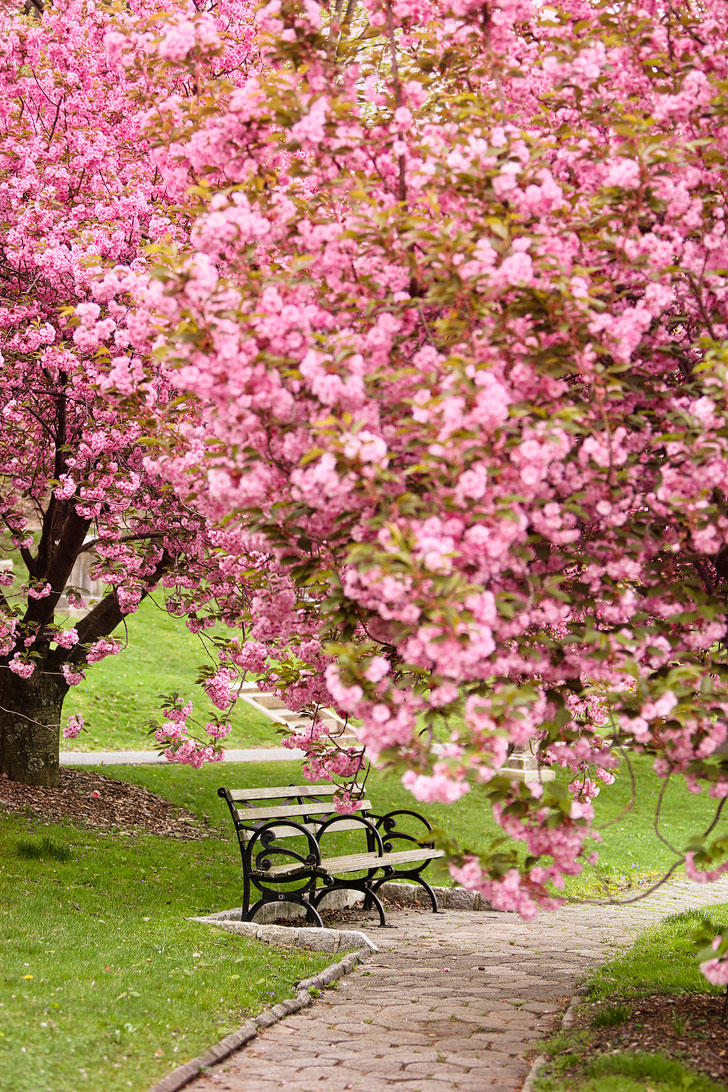 Cherry Blossoms in New York - Green-Wood Cemetery in Brooklyn // Local Adventurer #nyc #brooklyn