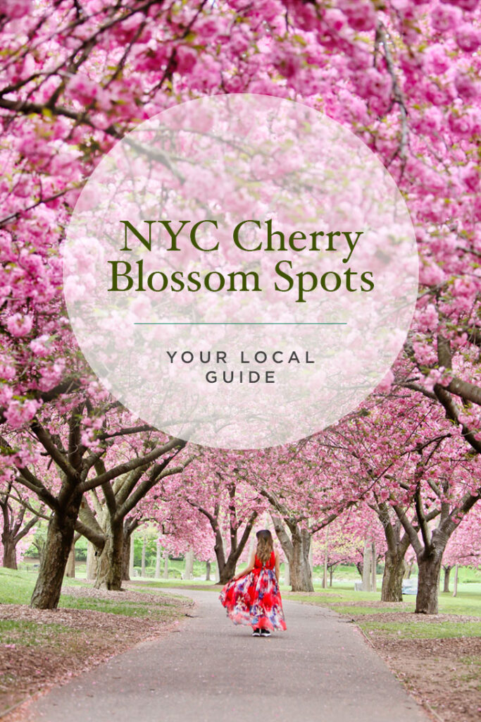 Where to See Cherry Blossoms in NYC // Local Adventurer #nyc #newyork