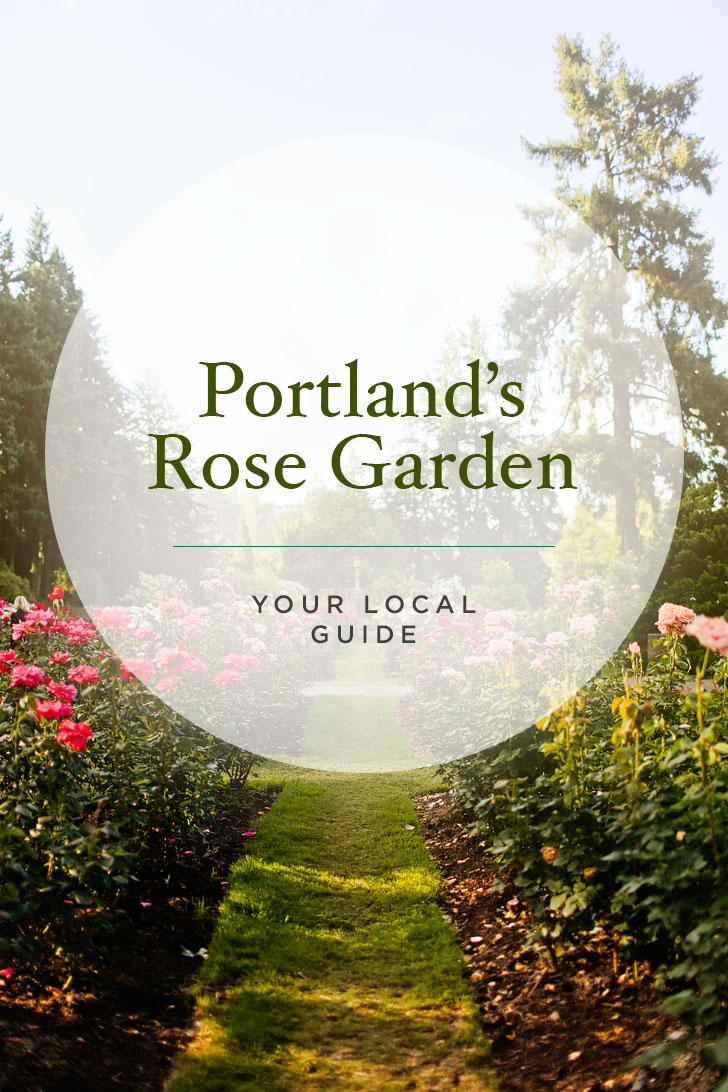 Your Essential Guide to the Portland Rose Test Garden - Portland Oregon has the ideal climate for growing roses outdoors. Click through to read more about the best spot to see roses in PDX // Local Adventurer #portland #oregon #pdx