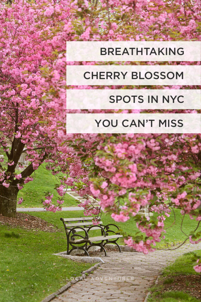Breathtaking Cherry Blossom Spots in New York You Can't Miss // Local Adventurer #nyc #newyorkcity