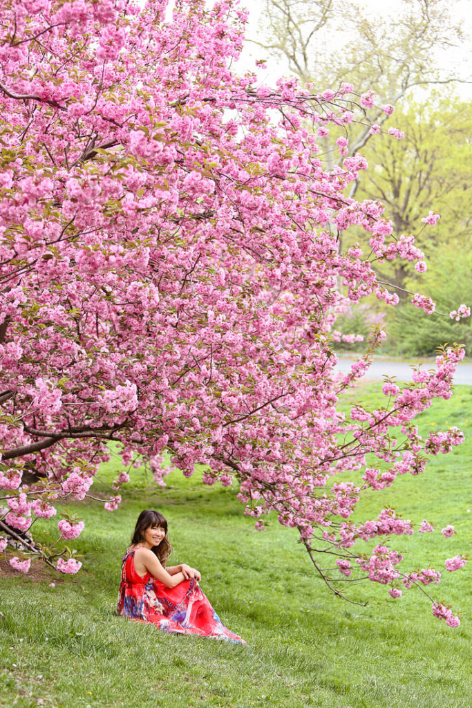 Central Park Cherry Blossoms along Bridle Path // Local Adventurer #nyc #centralpark