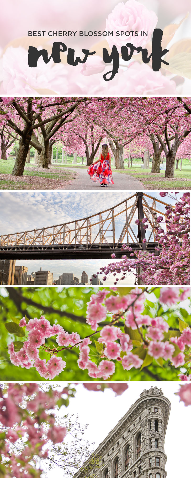 Cherry Blossom Festival in New York + Best Places to See Cherry Blossoms including Central Park, Roosevelt Island, and more + Essential Tips // Local Adventurer #nyc #newyork