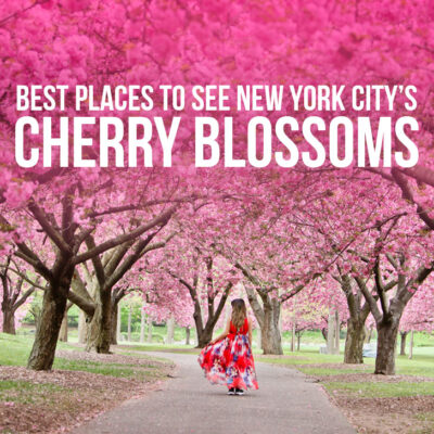 The Best Places to See Cherry Blossoms in New York City // Local Adventurer #nyc #newyork