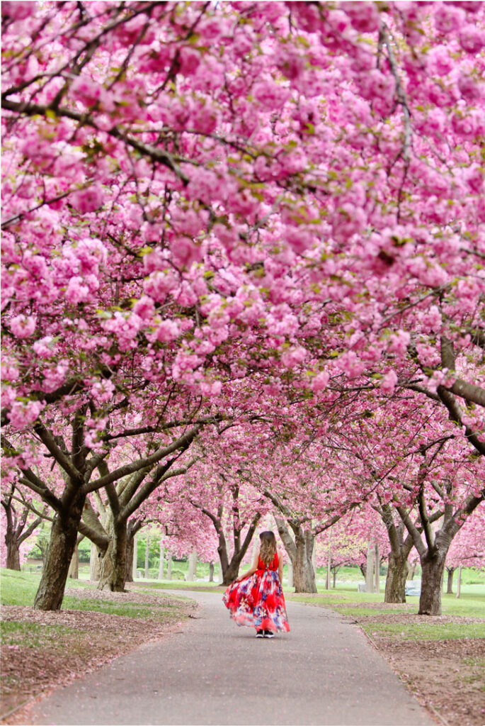 Brooklyn Botanical Garden Cherry Blossom Festival + Best Spots to See Cherry Blossoms in New York // Local Adventurer #brooklyn #newyork