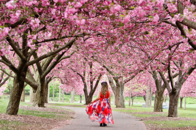 Cherry Blossom Festival NYC + Best Places to Spot Cherry Blossoms in New York // Local Adventurer #seeyourcity #nycgo #nyc #iloveny #newyork #newyorkcity #visittheusa #spring #cherryblossom