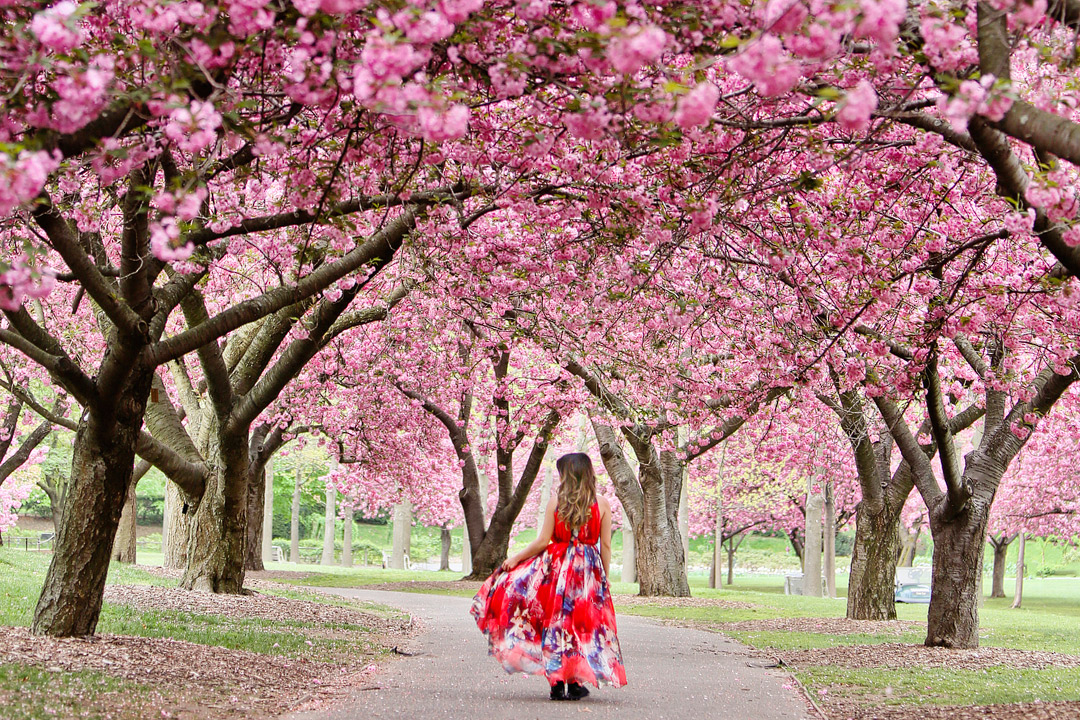 Best Places to See Cherry Blossoms in NYC on