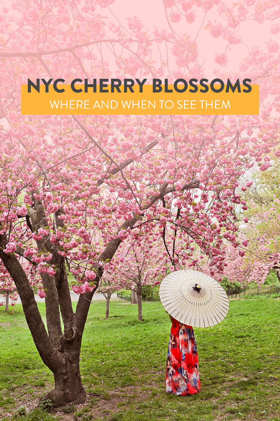 Your Essential Guide to Cherry Blossoms in NY - Where and When to Find Them // Local Adventurer #cherryblossom #nyc #newyork