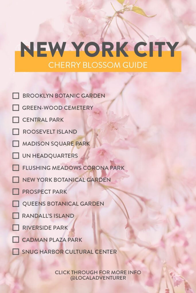Where and When to Find Cherry Blossoms NYC // Local Adventurer #newyork #spring