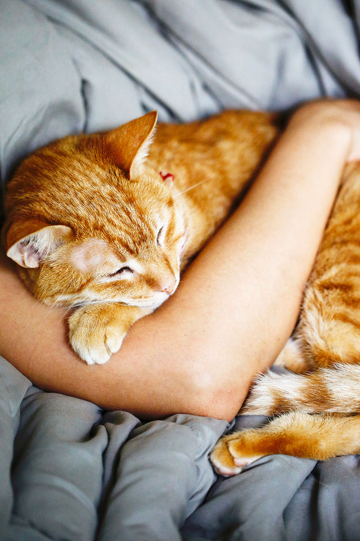 How to Stop Cat Shedding - 5 Helpful Tips // Local Adventurer #pets #cats #shedhappens