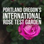 International Rose Test Garden in the City of Roses – Portland Oregon