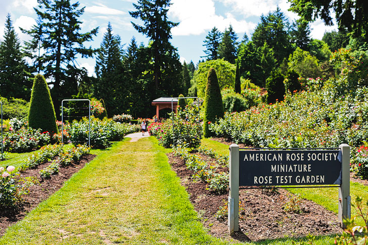 The International Rose Test Garden in Portland Oregon // Local Adventurer #pdx #portland #oregon