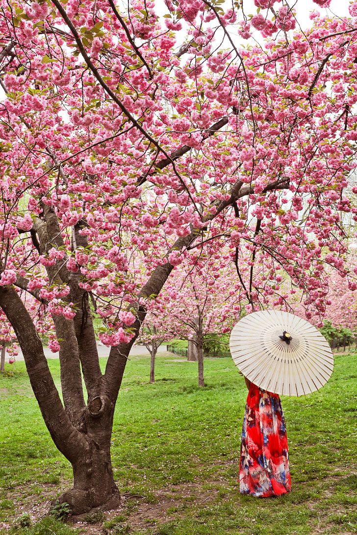 New York Cherry Blossom Central Park || Best Places to Spot Cherry Blossoms in New York City + Photography Tips // Local Adventurer #centralpark #nyc