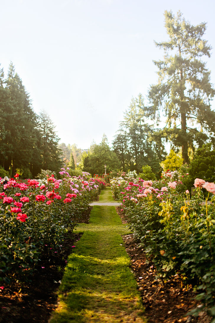 Roses In Garden: International Rose Test Garden In The City Of Roses