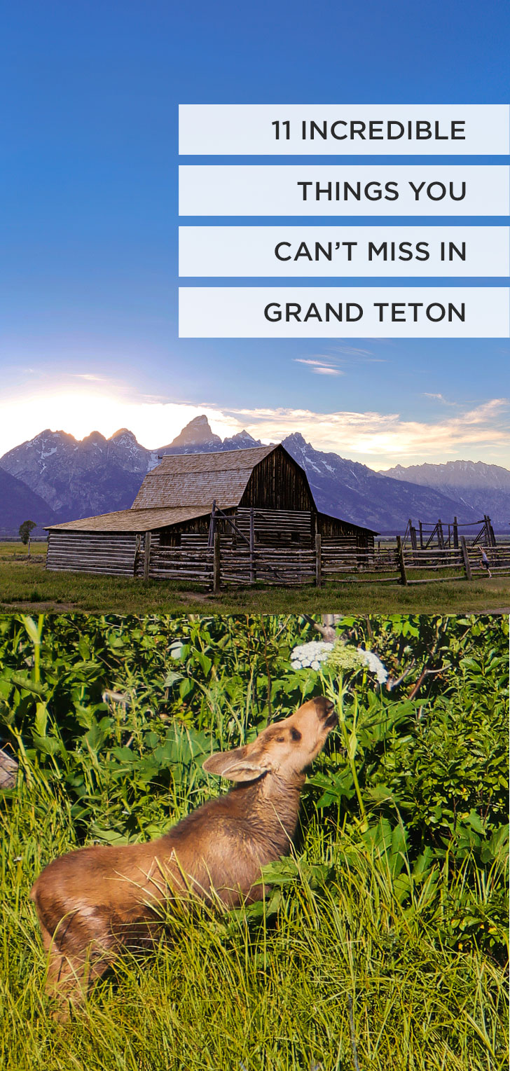 Whether you're traveling from Jackson Hole, Wyoming or Yellowstone National Park, you should absolutely visit Grand Teton National Park. Read this article to learn about the best camping spots in Grand Teton National Park, the best things to do, and lodging to help you plan your visit // Local Adventurer #wyoming #nationalpark #grandteton