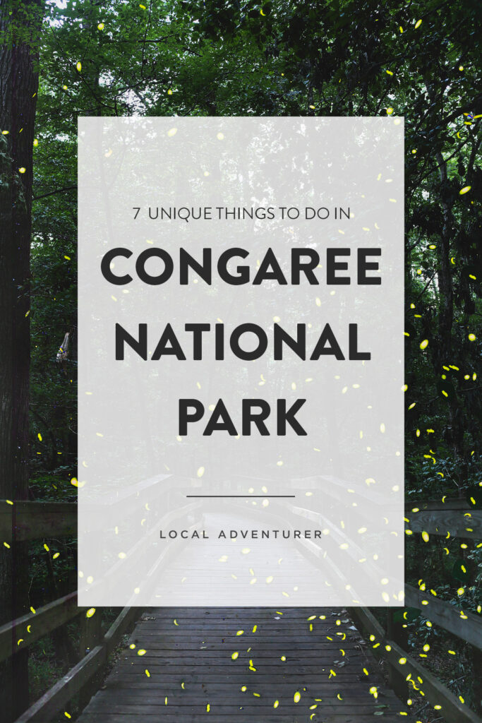 Synchronous fireflies in Congaree National Park