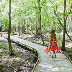 11 Unique Things to Do in Congaree National Park