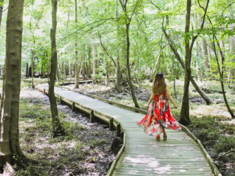 Want to make the most of your visit to Congaree National Park South Carolina? Save this pin and click through to find a list of the best things to do in Congaree National Park, when to visit to see the synchronous fireflies, how to best see the Congaree river, and what you should pack for your trip. This is one of the best places to visit in south carolina. // Local Adventurer #localadventurer #discoverSC #southcarolina #visittheusa #realcolumbiasc