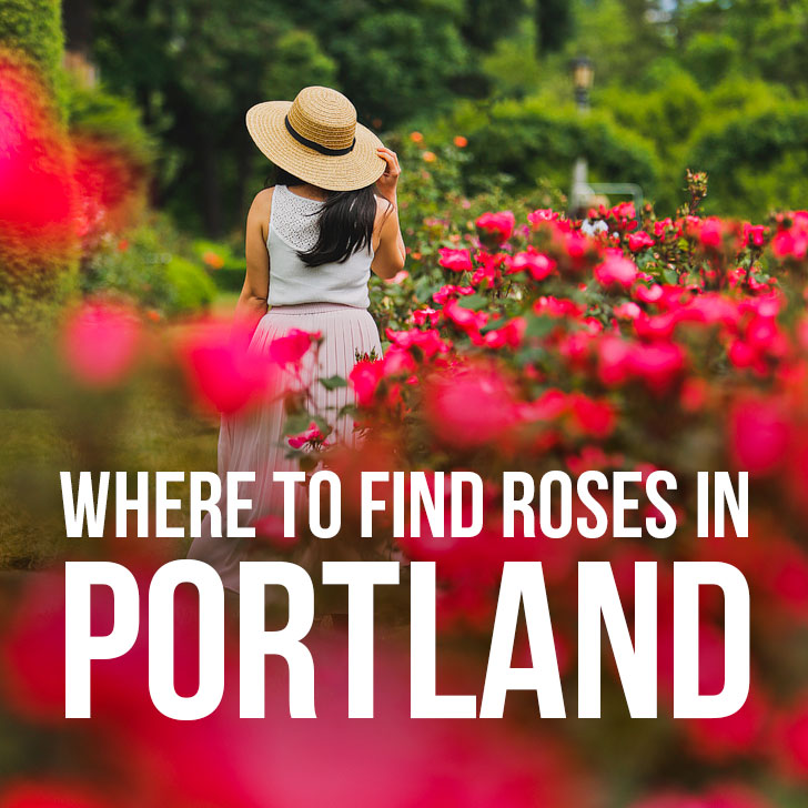 Are you visiting Portland in the summer? Portland Oregon is commonly called the City of Roses or Rose City. Check out this article to see where to find the roses • All the best rose gardens in Portland you need to visit • Best season and time to visit • Includes International Rose Test Garden, Peninsula Park, and More // Local Adventurer #pdx #portland #pnw #oregon #roses