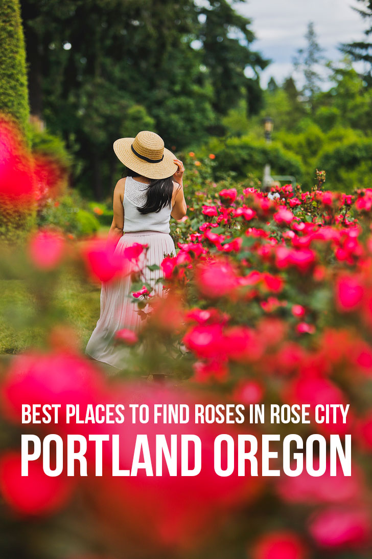 Are you visiting Portland in the summer? Portland Oregon is commonly called the City of Roses or Rose City. Check out this article to see where to find the roses in Rose City • when is Portland Oregon rose garden flower season • Includes International Rose Test Garden, Peninsula Park, and More // Local Adventurer #pdx #portland #pnw #oregon #roses