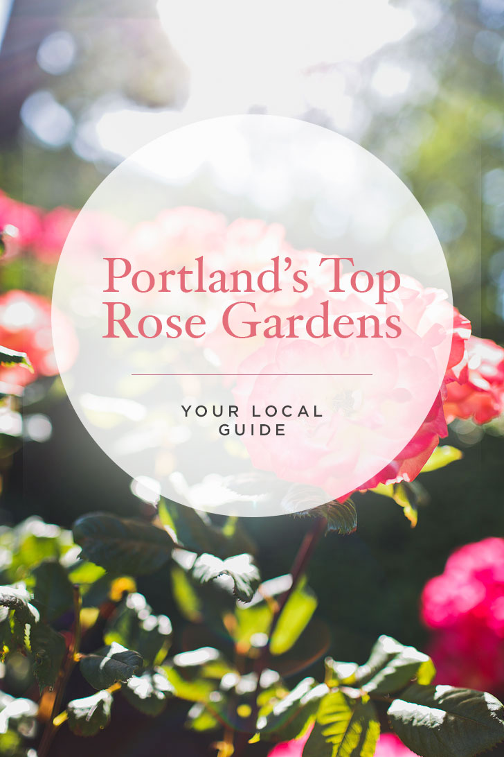 Are you visiting Portland in the summer? Portland Oregon is commonly called the City of Roses or Rose City. Check out this article to see where to find the roses • Best of Portland rose garden parks • Best Season and Time to Visit • Includes International Rose Test Garden, Peninsula Park, and More // Local Adventurer #pdx #portland #pnw #oregon #roses