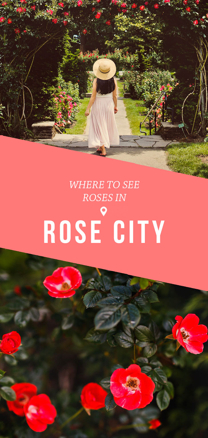 Are you visiting Portland in the summer? Portland Oregon is commonly called the City of Roses or Rose City. Take a look at this post to see the best spots to find the roses in Rose City • Learn when is the Portland Oregon rose garden flower season • Includes International Rose Test Garden, Peninsula Park, and More // Local Adventurer #pdx #portland #pnw #oregon #roses