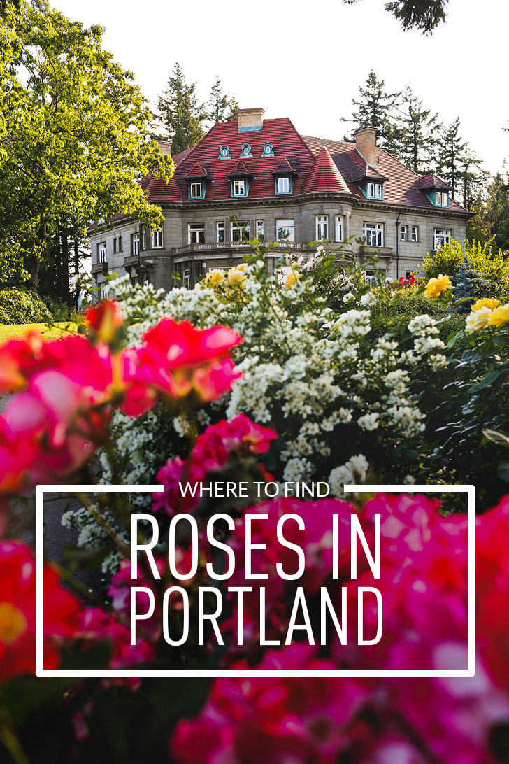 portland oregon is commonly called the city of - Portland Rose Garden