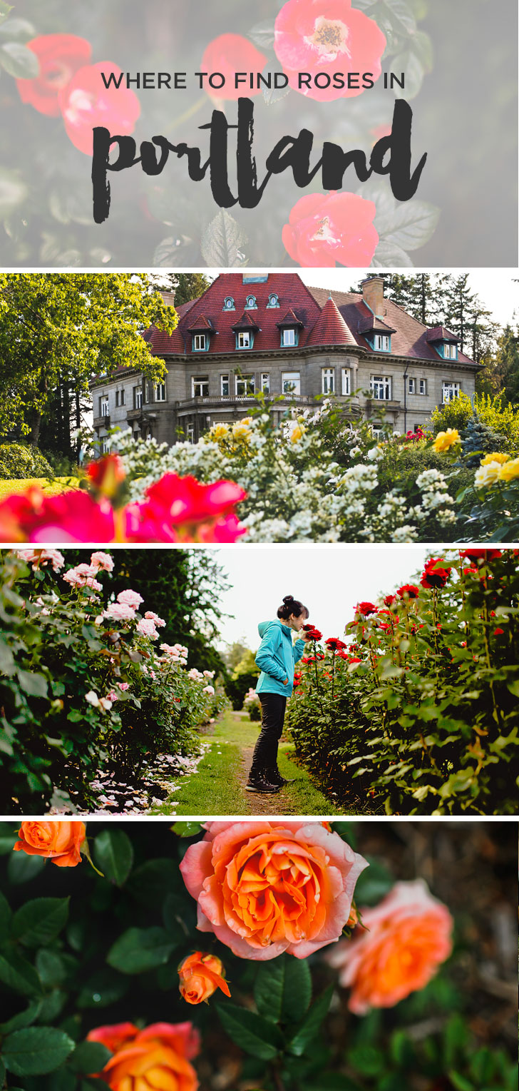 Are you visiting Portland in the summer? Portland Oregon is commonly called the City of Roses or Rose City. Take a look at this article to see the best places to find Roses in Portland • Best Rose Gardens in Portland Oregon • Best Season and Time to Visit • Includes International Rose Test Garden, Peninsula Park, and More // Local Adventurer #pdx #portland #pnw #oregon #roses