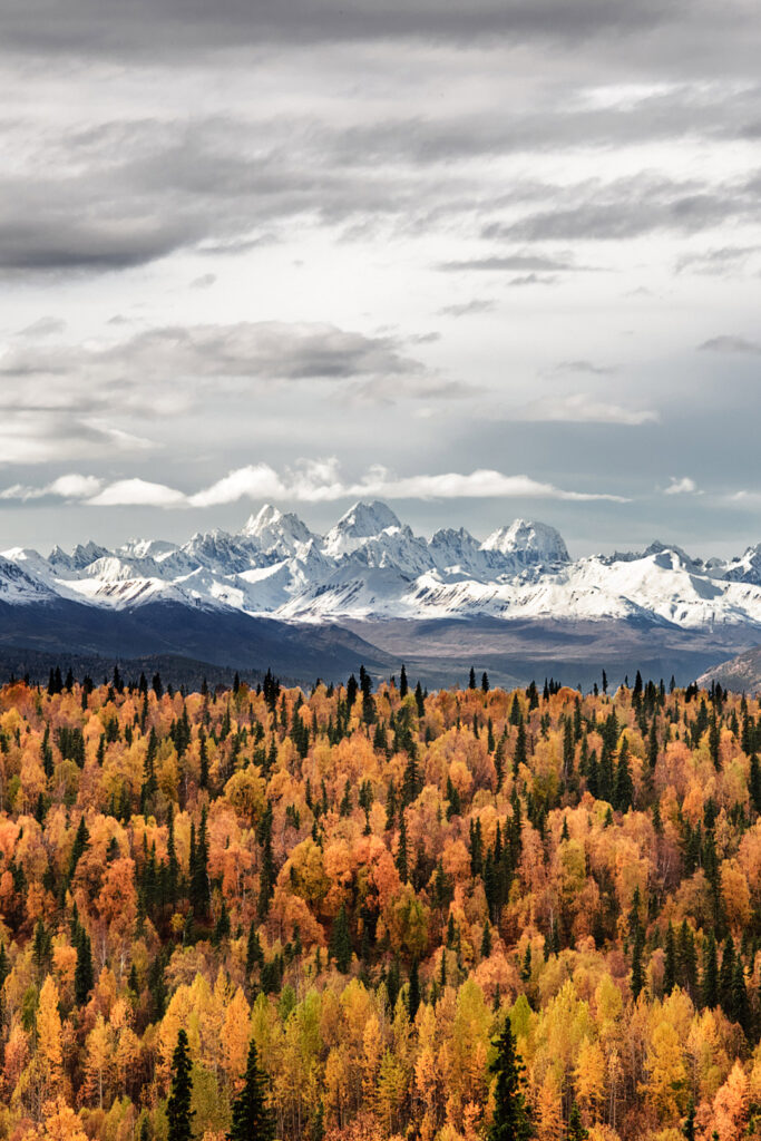Autumn in Alaska + 17 Places for the Best Fall Foliage in the USA // Local Adventurer #usa #travel #fall #foliage #autumn #leaves #alaska #anchorage #trees #orange