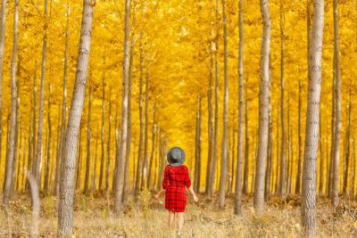 17 Breathtaking Places for the Best Fall Foliage in the USA // Local Adventurer #fall #fallfoliage #usa #travel #autumn #trees #leaves #orange #boardman #oregon