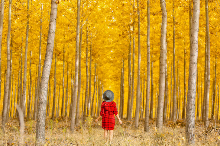 17 Breathtaking Places for the Best Fall Foliage in the USA // Local Adventurer #fall #fallfoliage #usa #travel #autumn #trees #leaves #orange #boardman #oregon