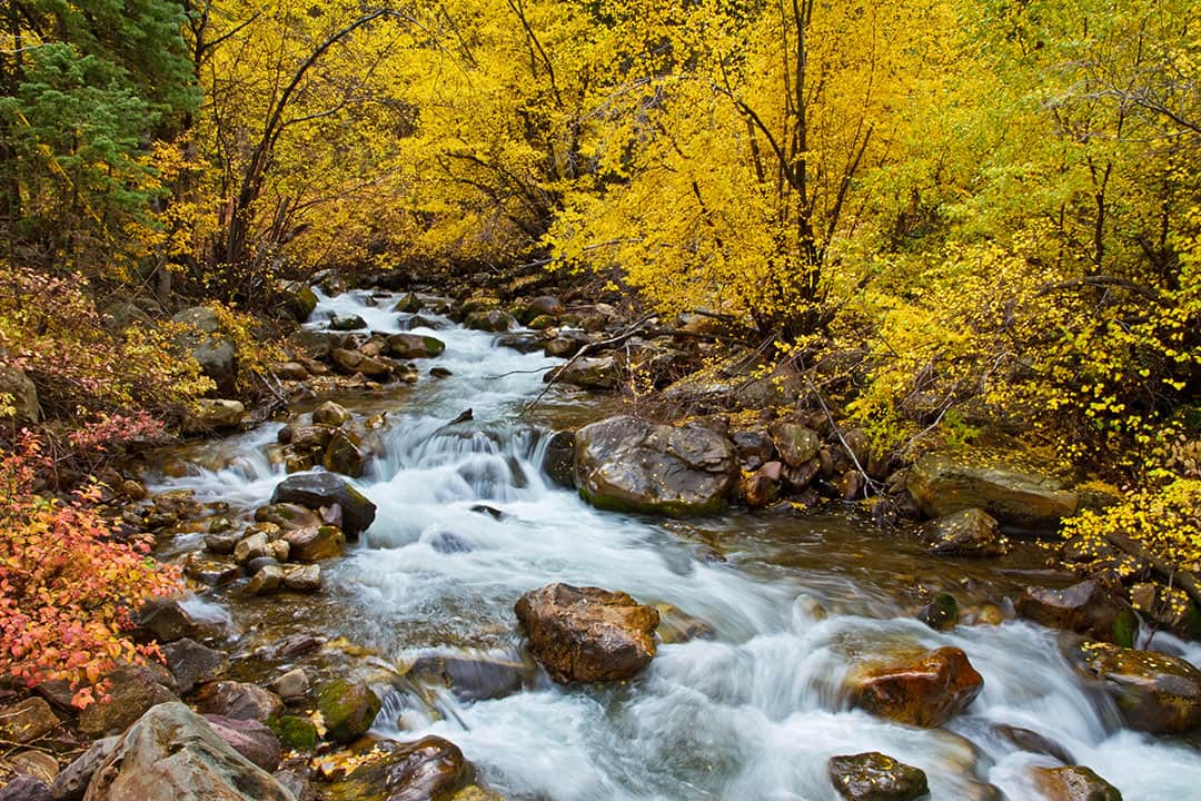 big cottonwood canyon fall colors + best fall foliage in usa