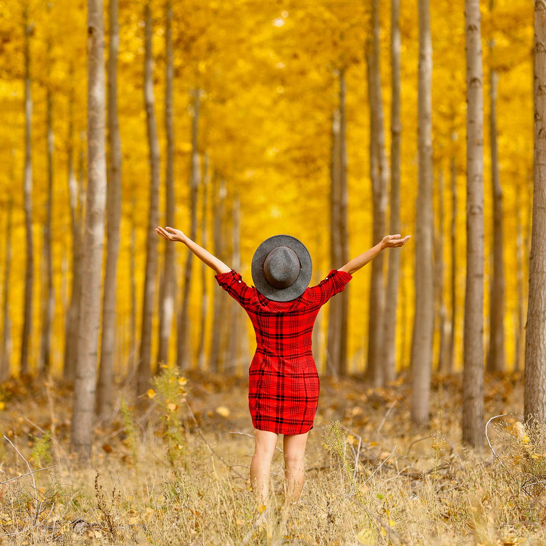 Boardman Tree Farm + 17 Best Places to Visit in Autumn in the US // Local Adventurer #fallfoliage #fall #autumn #leaves #trees #usa #travel #boardman #oregon #or
