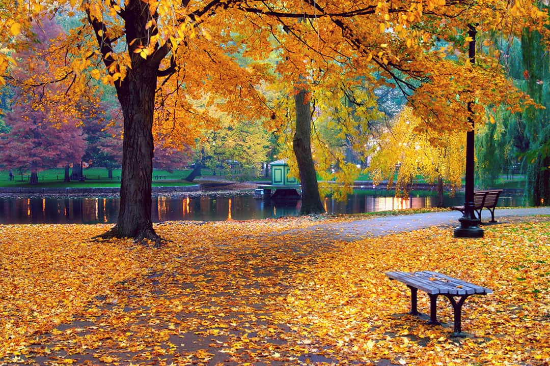 Boston Fall Foliage + 17 Best Fall Vacation Spots in the US // Local Adventurer #fall #foliage #usa #travel #autumn #colors #leaves #boston #massachusetts #vacation