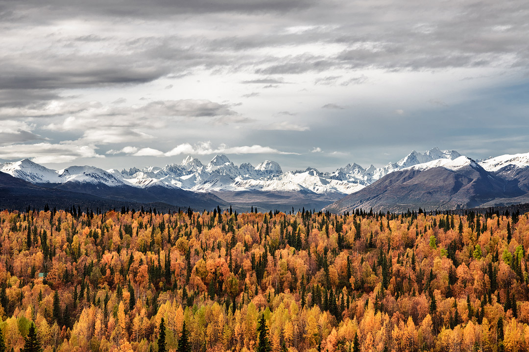 Anchorage - Fall in Alaska + 17 Best Fall Vacations in the US and Fall Foliage Best Places // Local Adventurer #fall #foliage #autumn #colors #leaves #anchorage #alaska #usa #travel
