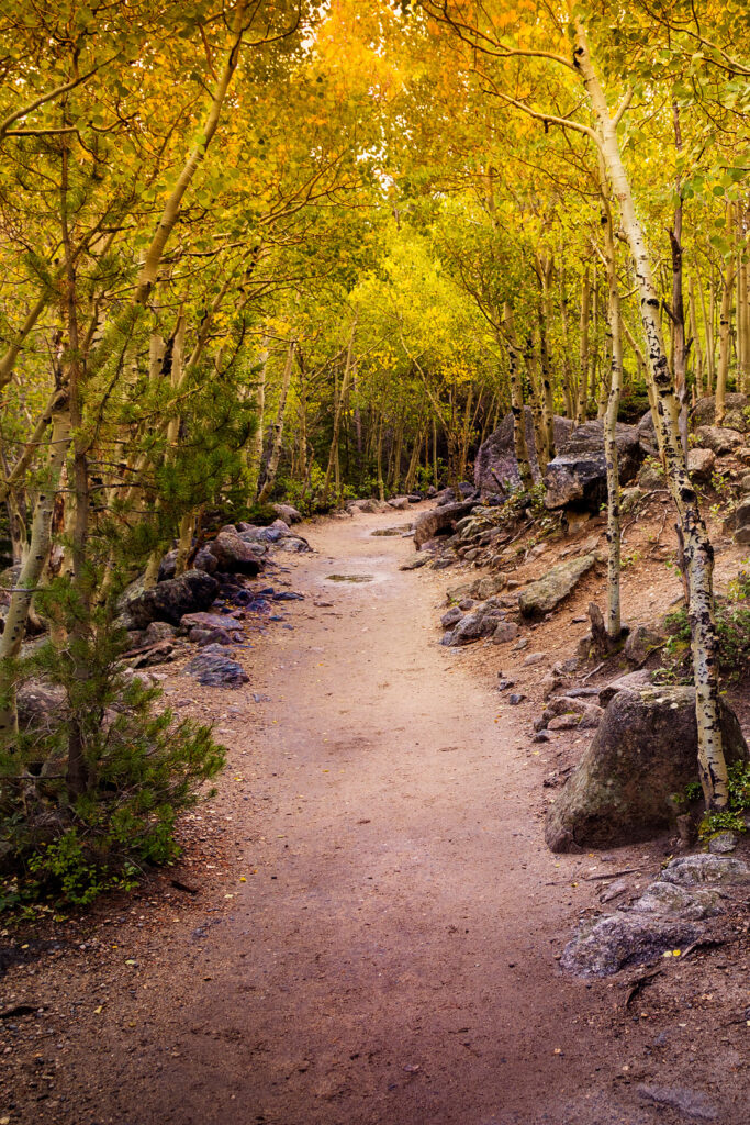 Rocky Mountain National Park Fall Colors + 17 Best National Parks to Visit in the Fall and US Cities with Beautiful Fall Colors // Local Adventurer #usa #travel #fall #foliage #autumn #leaves #trees #colorado #nationalpark #findyourpark