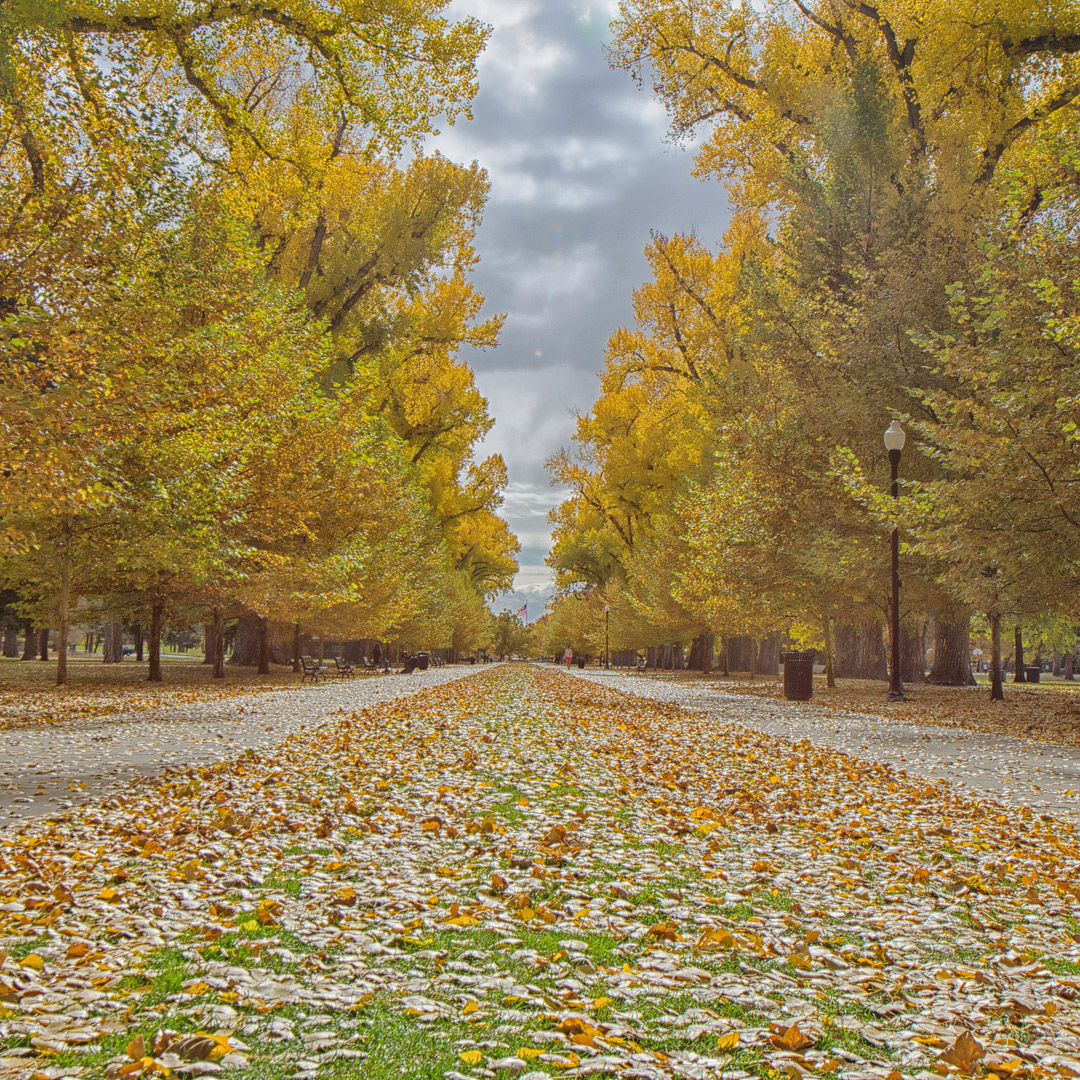 Salt Lake City Fall Colors + 17 Best Places for Fall Foliage in the US // Local Adventurer #fall #colors #foliage #autumn #usa #slc #saltlakecity #leaves #utah #visitutah