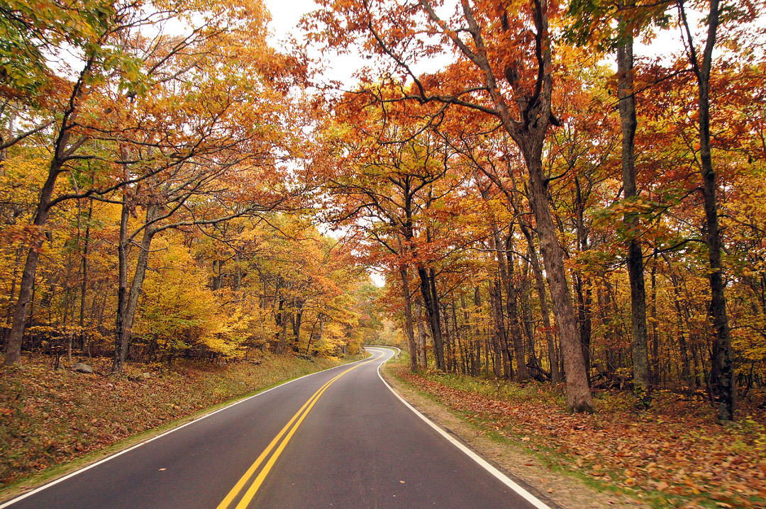 Shenandoah National Park Fall Foliage + 17 Best Places to See Fall Foliage in the US // Local Adventurer #usa #travel #fall #foliage #autumn #leaves #trees #shenandoah #va #virginia