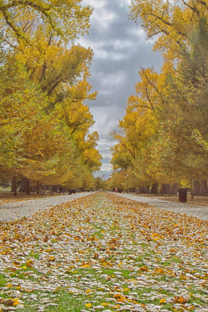 SLC Utah Fall Colors + Where to See the Best Fall Foliage in the US // Local Adventurer #fall #foliage #color #autumn #utah #saltlakecity #slc #usa #travel #leaves