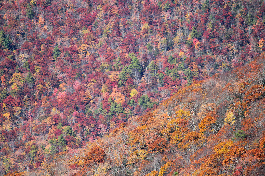 Brasstown Bald Fall Foliage + 13 Amazing Fall Activities in Georgia // Local Adventurer