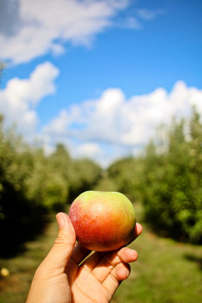 Ellijay Apple Festival + 13 Unforgettable Places for Autumn Foliage and Fall Festivals in Georgia // Local Adventurer // Local Adventurer #georgia #ga #fall #autumn #festival