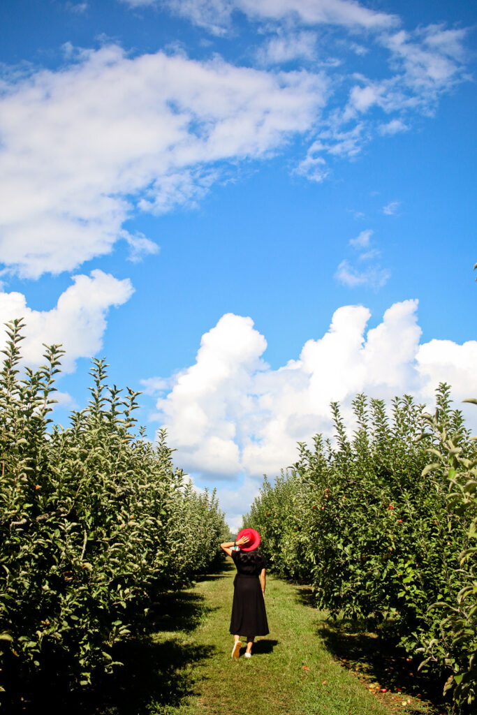 Hillcrest Apple Orchard + 13 Amazing Fall Activities and Fall Festivals in Georgia // Local Adventurer #georgia #fall #autumn #fallactivities #apples