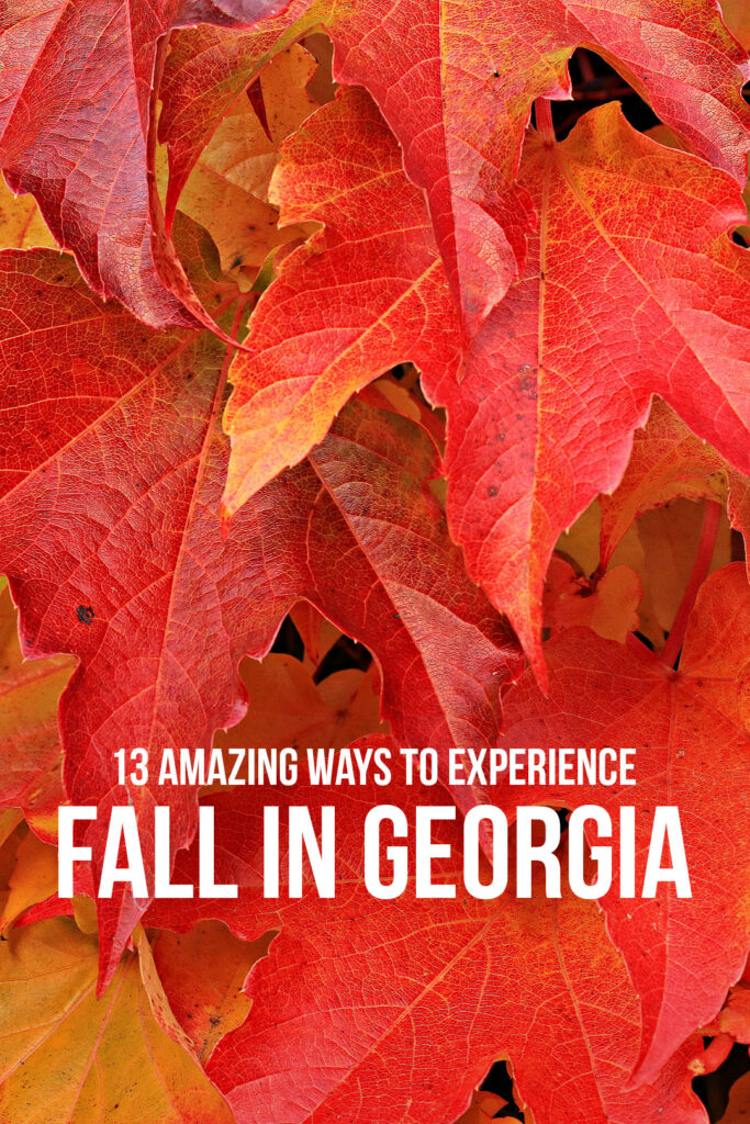 North Georgia Fall Festivals + Apple Festival in Elijay Georgia + Gibbs Gardens Fall Festival + Owl o Ween Hot Air Balloon Festival and More // Local Adventurer #fallfestival #autumn #fall #georgia #usa
