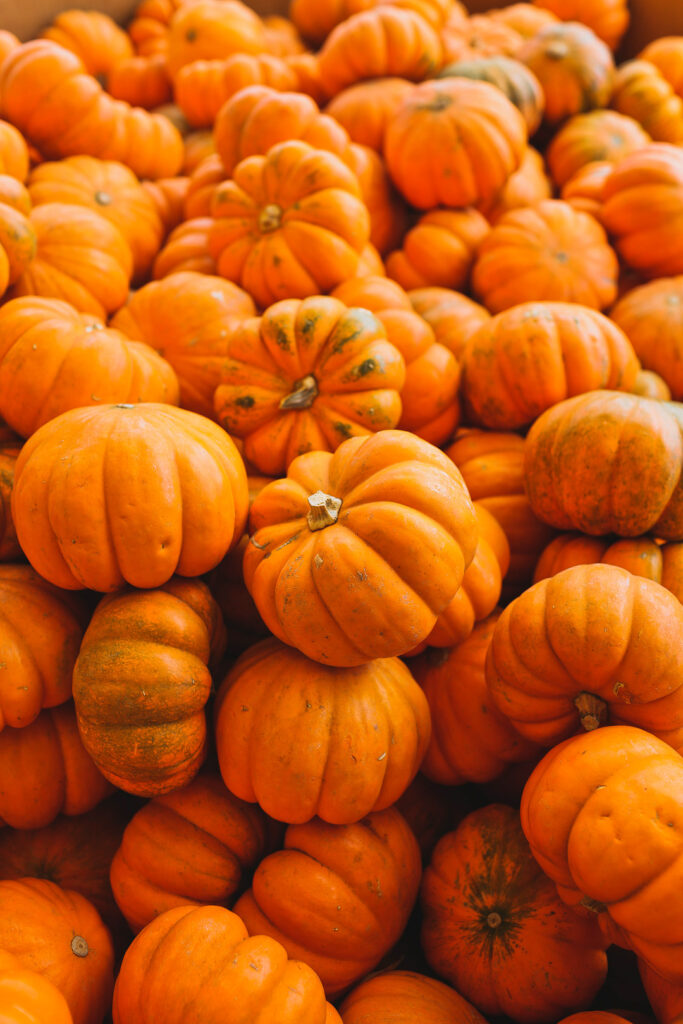 13 Amazing Fall Activities and Pumpkin Patches Near Atlanta Georgia // Local Adventurer #georgia #fall #autumn #fallactivities #falltravel