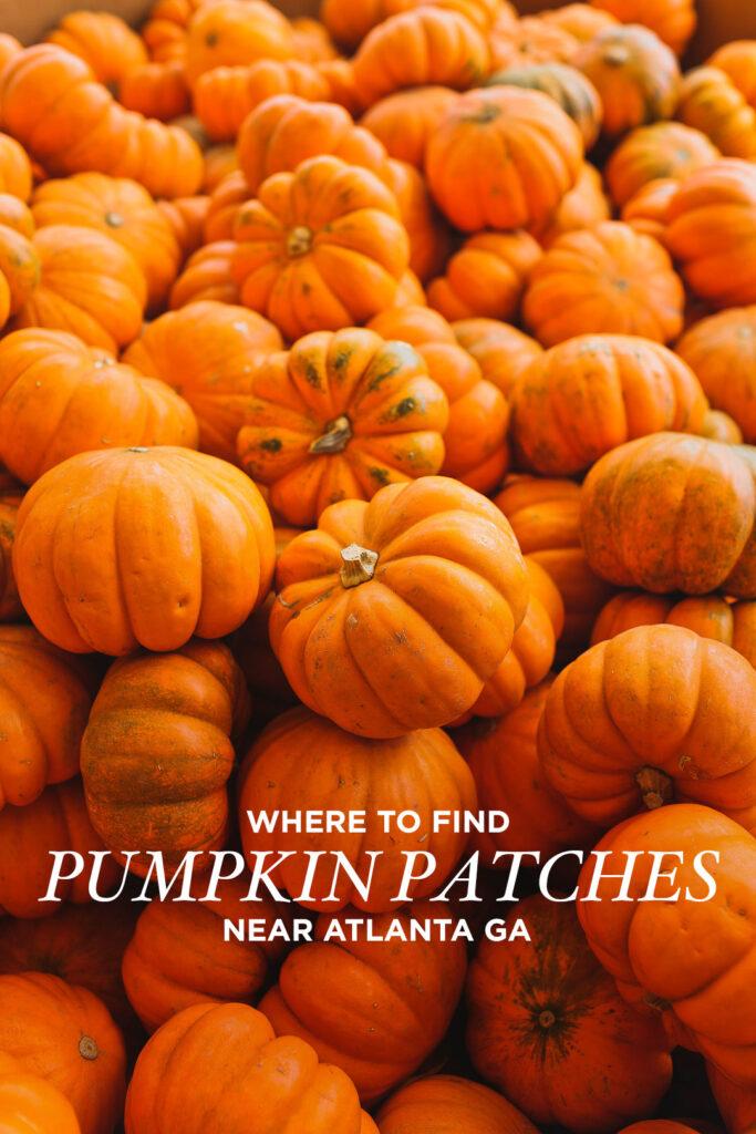 13 Fall Activities and Pumpkin Patches in Georgia You Can't Miss // Local Adventurer #georgia #fall #autumn #fallactivities #falltravel