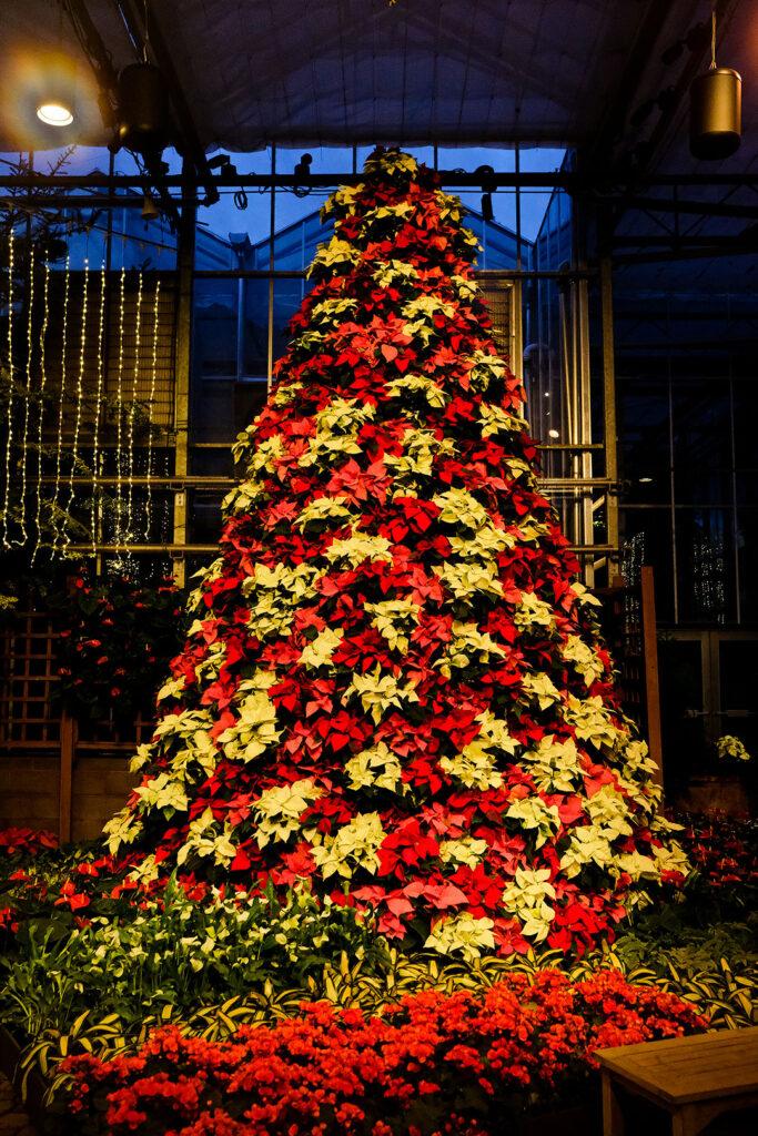 Atlanta Botanical Garden Christmas + 11 Best Things to Do During Christmas in Atlanta