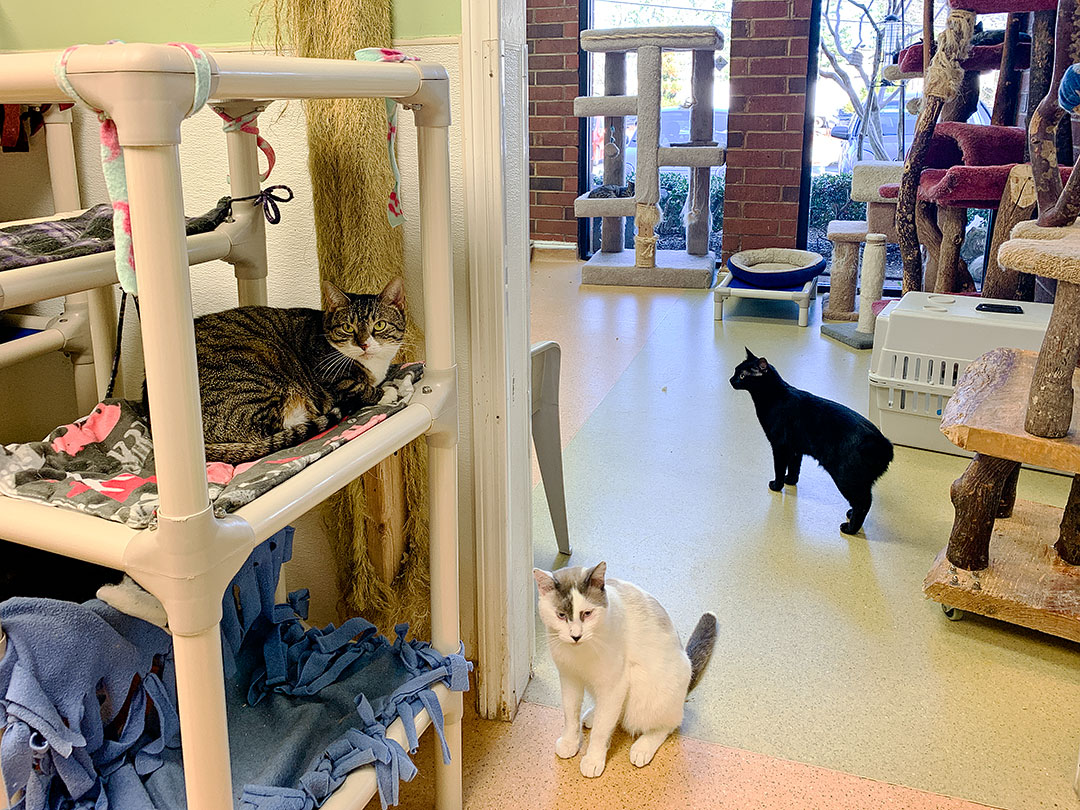 Furkids Cat Shelter