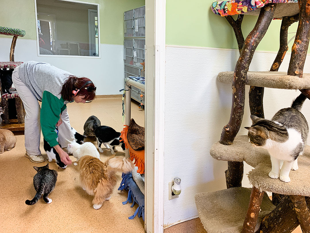 Furkids Atlanta Cat Shelter